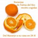 NARANJAS DE PALMA 15K X 22.50 TRANSPORTE INCLUIDO PENINSULA
